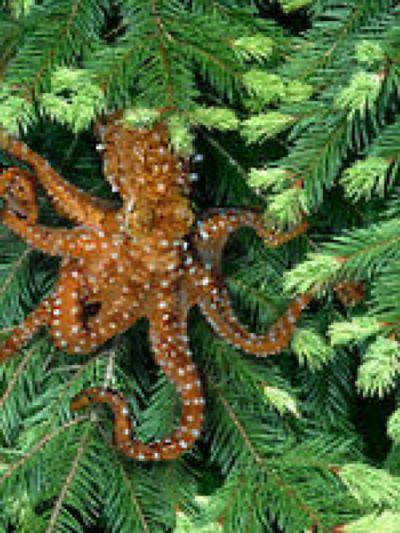 The Fish That Climb Trees Quantum Biologist